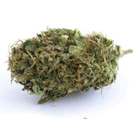 Fleur de cannabis légale AMNESIA
