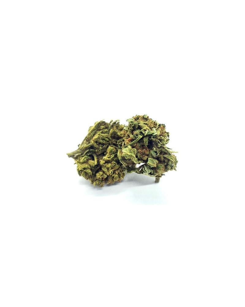 la tête de Lemon haze fleur de CBD