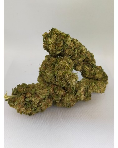 Big Bud tropical CBD