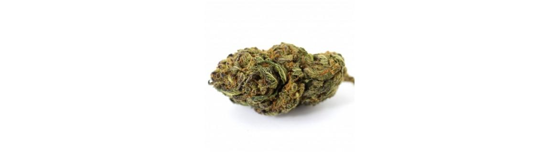 Fleur CBD Weed CBD légale - Boissons aux fleurs de CBD